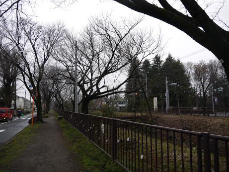20140311_tamagawa_jyousui4