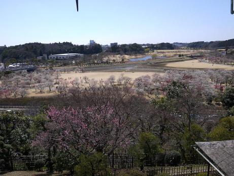 20140329_nagame3