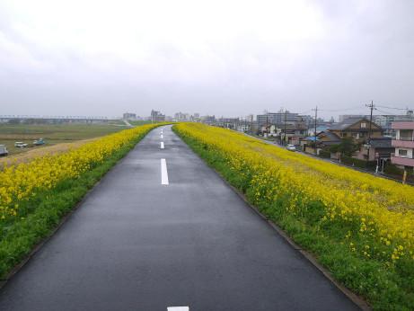 20140331_nanohana04