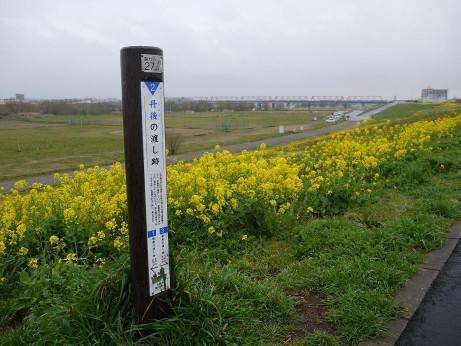 20140331_nanohana06