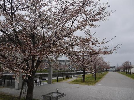 20140331_sakura07