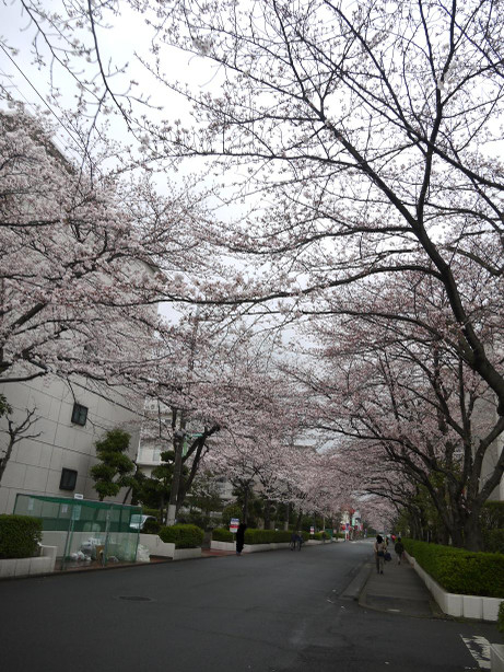 20140331_sakura18