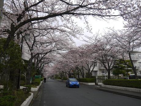 20140331_sakura19