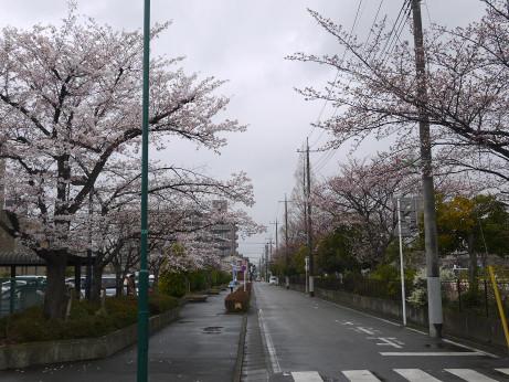20140331_sakura21