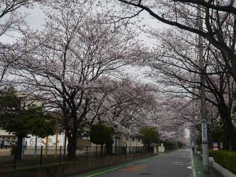 20140331_sakura22