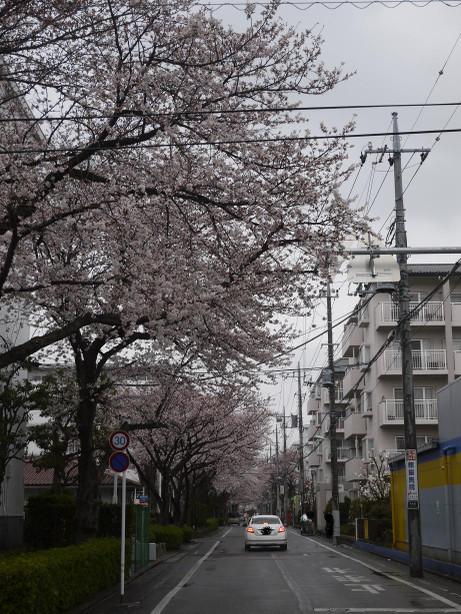 20140331_sakura23