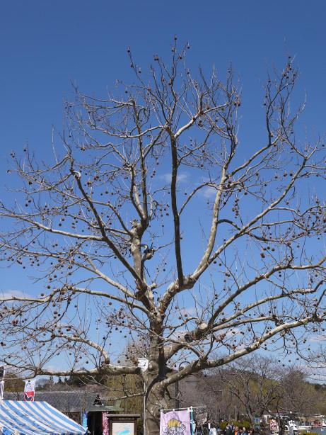 20140403_tree