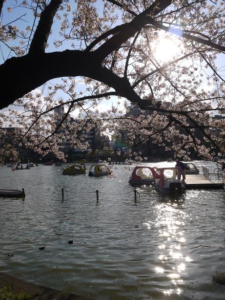 20140407_sinobazuike1