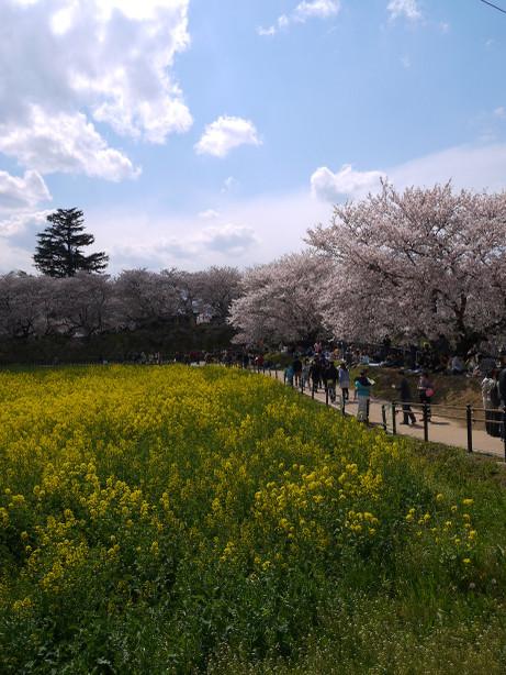 20140408_nanohana01