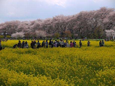 20140408_nanohana04