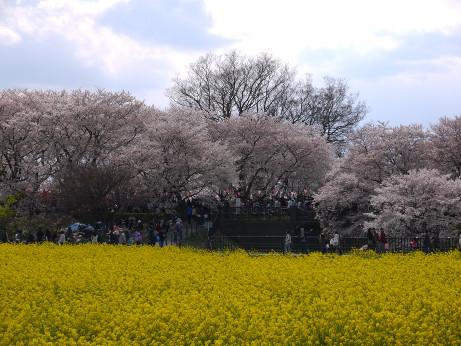 20140408_nanohana08