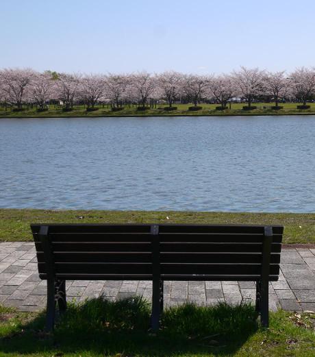 20140410_sakura24