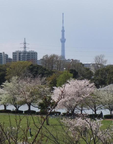 20140410_sky_tree