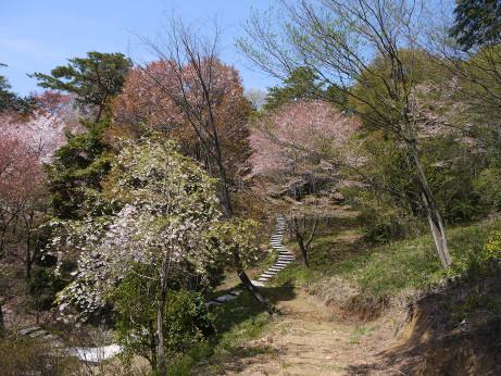 20140425_sansaku