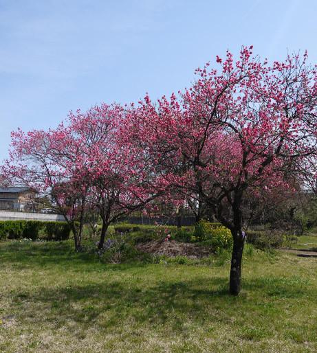 20140503_tree
