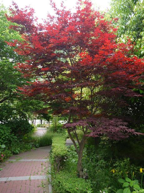 20140618_tree