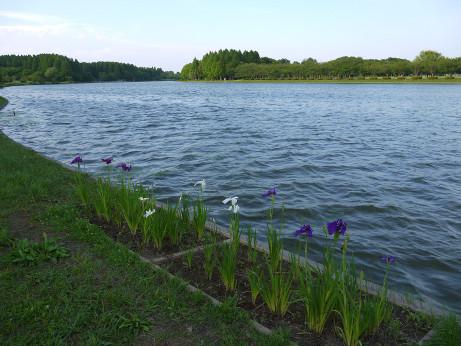 20140623_koaidamei2
