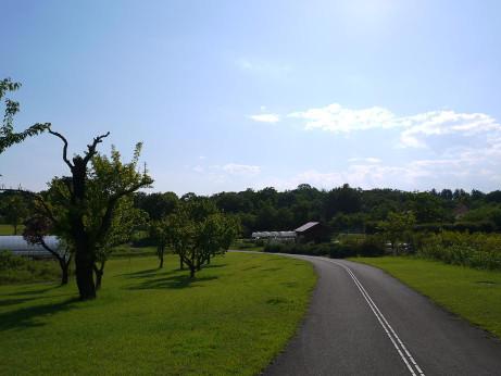 20140704_tree1