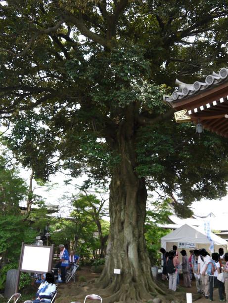 20140716_mukunoki