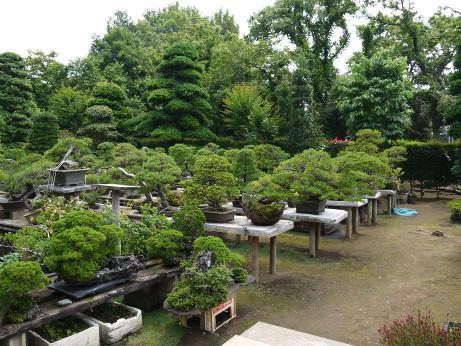 20140719_garden