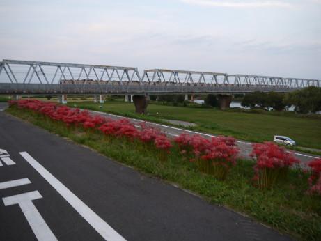 20140924_higanbana_06