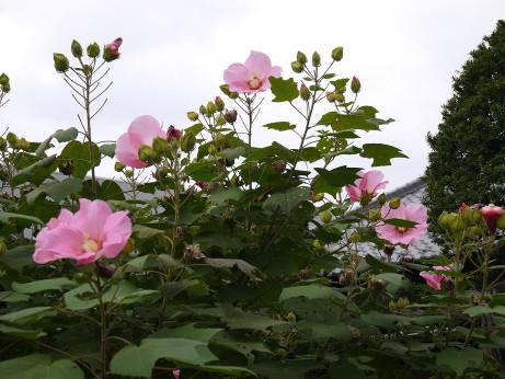 20141016_flower