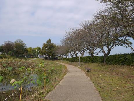 20141112_nakainuma_park_06