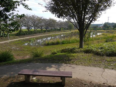 20141112_nakainuma_park_09