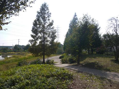 20141112_nakainuma_park_10