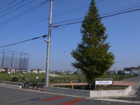 20141115_park_01