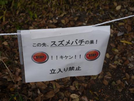 20141128_yokoana_05