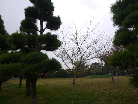 20141130_minato_park_03