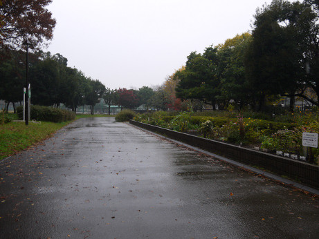 20141210_park_1