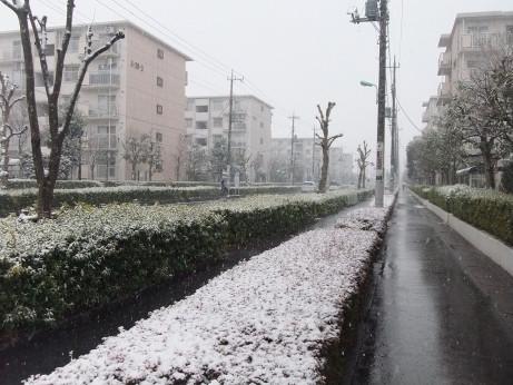 20150131_snow_1