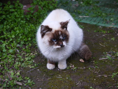20150308_cat
