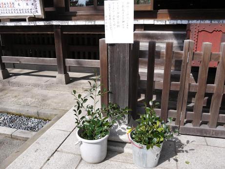20150314_sakaki