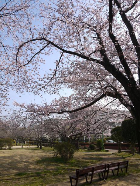 20150404_waseda_sakura_06