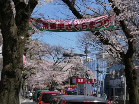 20150405_tokiwadaira_sakura_05