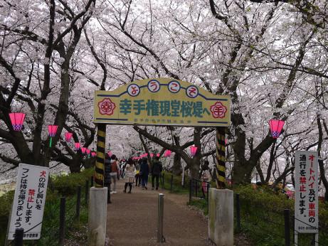 20150406_sakura_01