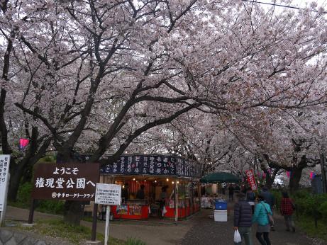 20150406_sakura_03
