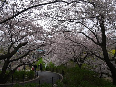 20150406_sakura_05