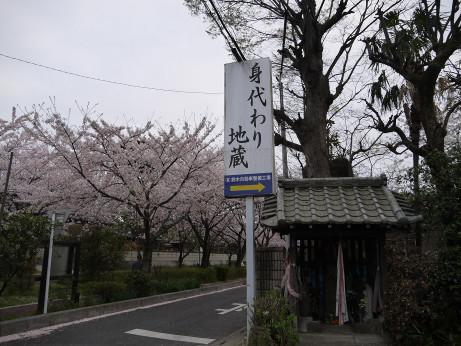 20150409_sakura_03