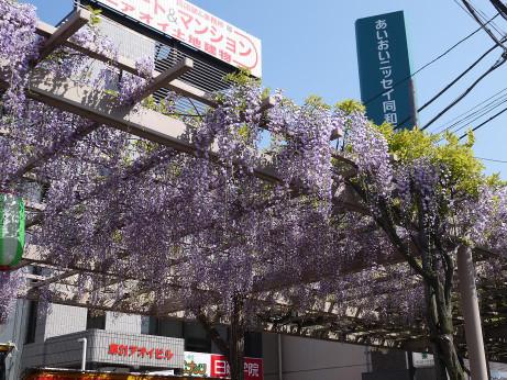 20150429_fujidana_1