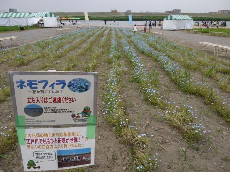20150510_flower_3