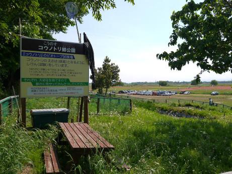 20150527_kounotorisato_park