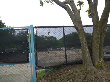 20150728_tennis
