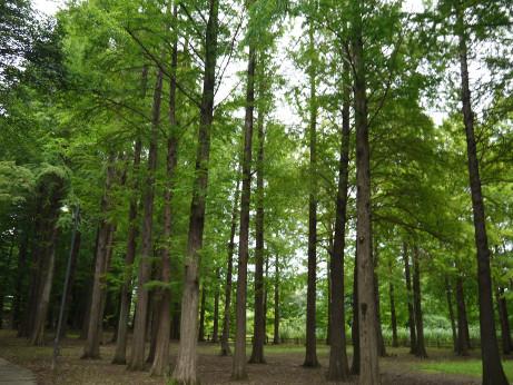 20150807_tree