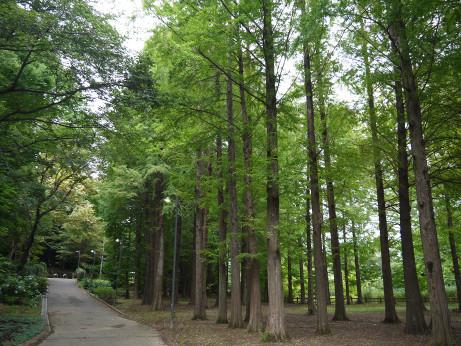 20150807_tree_2