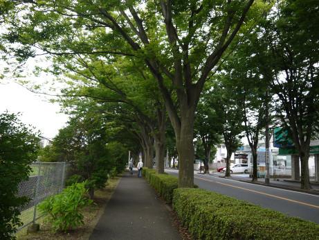 20150905_keyakidori