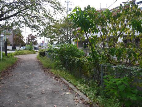 20151002_flower_road_4